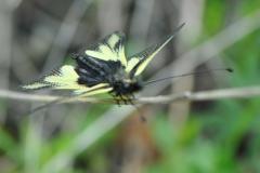 DSC_7537 Libellen-Schmetterlingshaft
