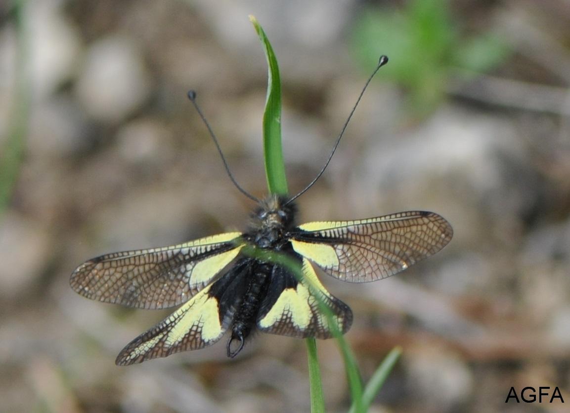 DSC_7531 Libellen-Schmetterlingshaft